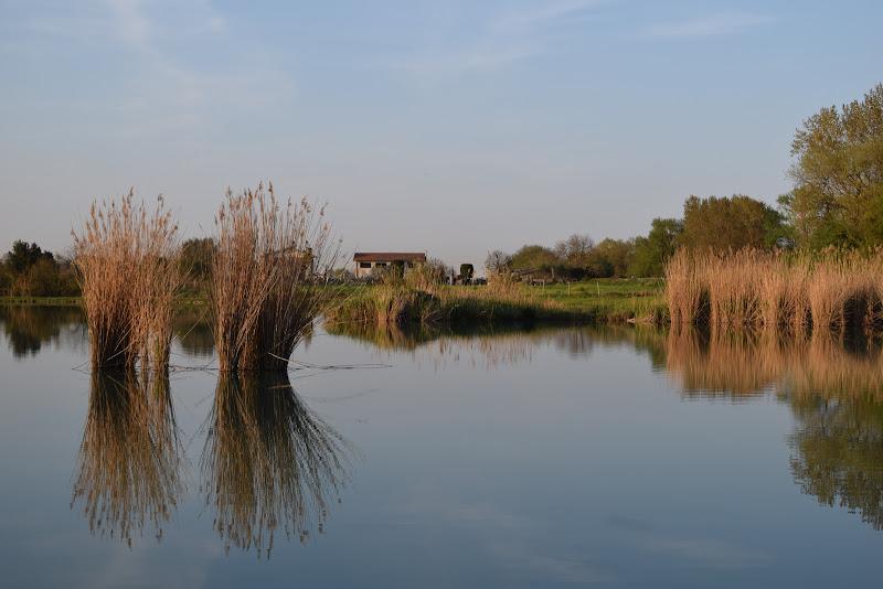 canne sul lago di ale_brescio