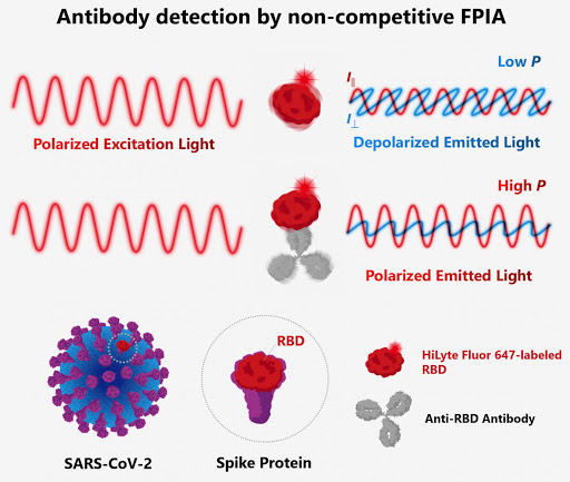 A rapid method to quantify antibodies against SARS-CoV-2