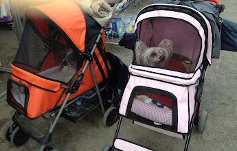 Photo: Doggie strollers!