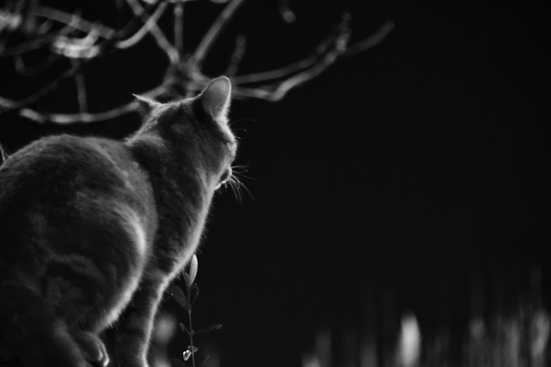 Solo luce ed ombra di MersaPhotography