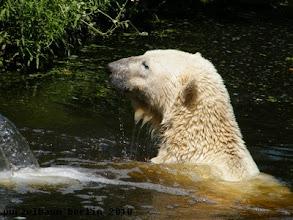 Photo: Hm, Gianna will wohl nicht ins Wasser ?