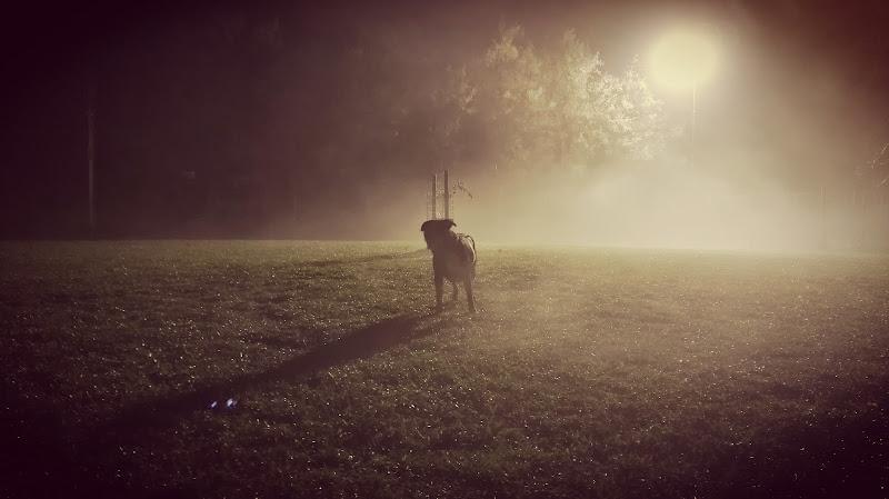 Solitudine nella nebbia di Riccardo Giri