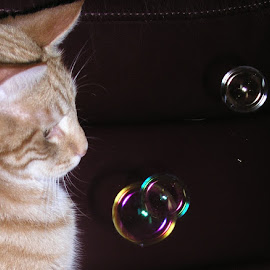 bubble game by Sue Rickhuss - Animals - Cats Playing (  )