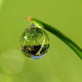 raindrops by Barbara Croft - Nature Up Close Water ( macro. water. raindrops. nature )