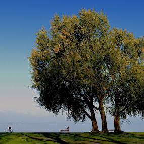 the Tree by Wechtitsch Bernhard - Landscapes Travel