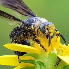 Pistil flower bath by Sam Moshavi - Animals Insects & Spiders ( bee )