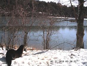 Photo: Tisbury Great Pond Otter at Den site