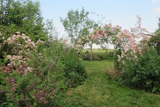 Photo: Blush rambler et rosa multiflora cathayensis