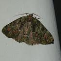 Tantoon Moth - male