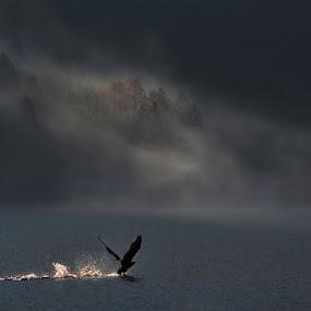 Take off by Uroš Florjančič - Landscapes Waterscapes