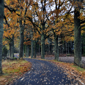 Autumn in sweden by Stefan Pettersson - Landscapes Forests ( autumn sweden road movement colors )