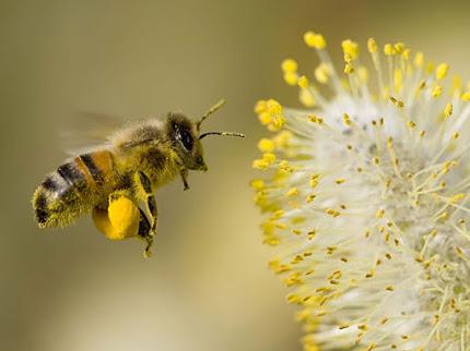 Khám phá bí quyết trị nám bằng phấn hoa