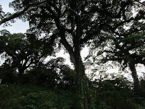 Photo: Hanging roots from epiphytes