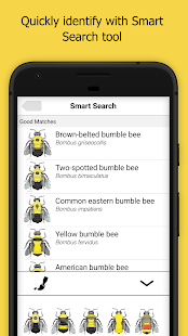 Bumble Bee Watch