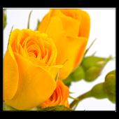 Yellow Rose Live Wallpaper