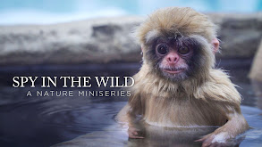 Spy in the Wild: A Nature Miniseries thumbnail