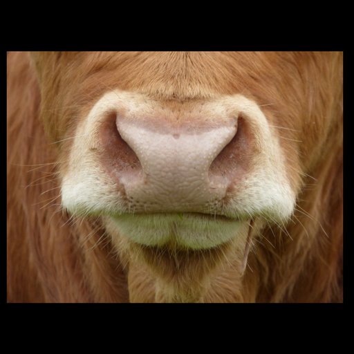 CowSaidWhat avatar image