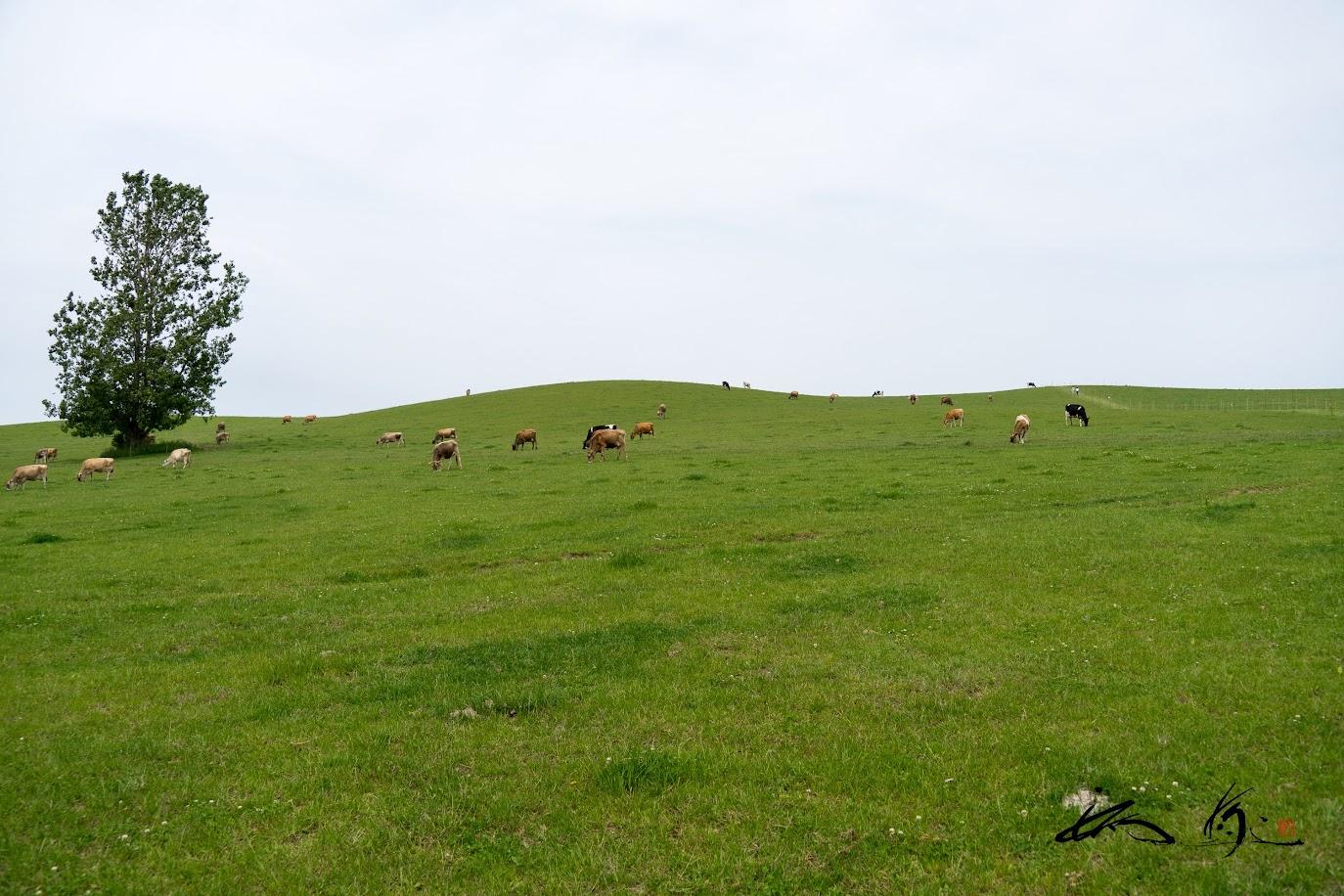 空に浮かぶ緑の牧場。。。