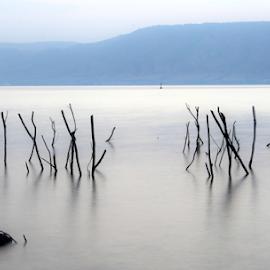 by Yuval Shlomo - Nature Up Close Water ( sunrise, sunset, sun, lake, summer, sea )
