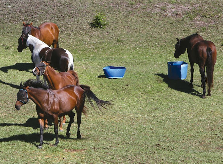 Horse riding is one activity at Sardinia Bay