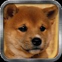 Shiba Doge Live Wallpaper icon