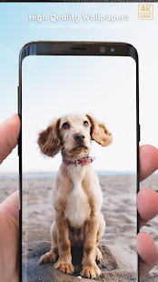 Puppy Wallpapers 4K PRO Puppy Backgrounds Screenshot