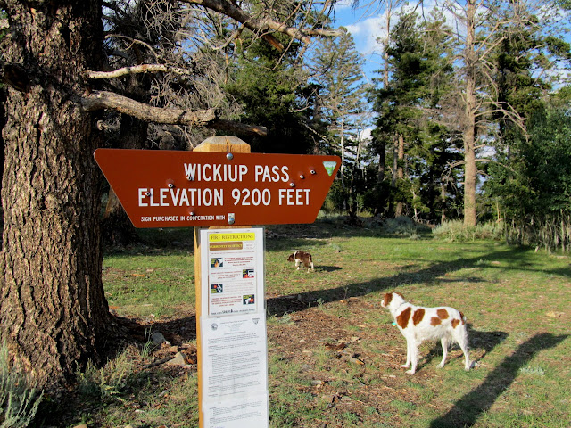 The dogs stretching their legs at Wickiup Pass