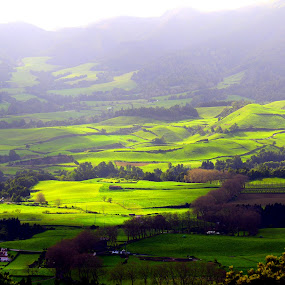 Greens by Gil Reis - Landscapes Sunsets & Sunrises ( life, bio, nature, colors, places, azores, fields )