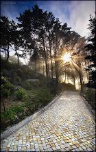 "Photo: An oldie, shot some years ago.  ""Radiant Healing""  ""When Nature heals...""  José Ramos © http://www.facebook.com/joseramosphotography  Location: Sintra - Jardim da Pena (Portugal)"
