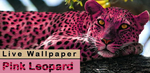Pink Leopard Live Wallpaper Apps On Google Play