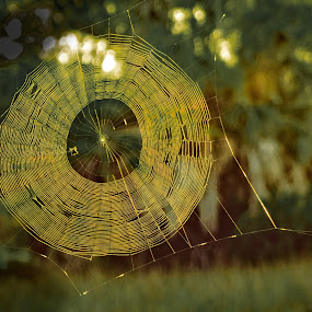 Spider Web Sunrise by Mike Moss - Nature Up Close Webs