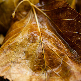 Nervure by Niloofar Rezaee - Nature Up Close Leaves & Grasses
