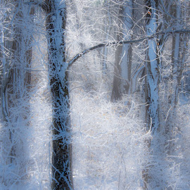 by Stephen  Barker - Nature Up Close Trees & Bushes ( light, snow, ice, trees )