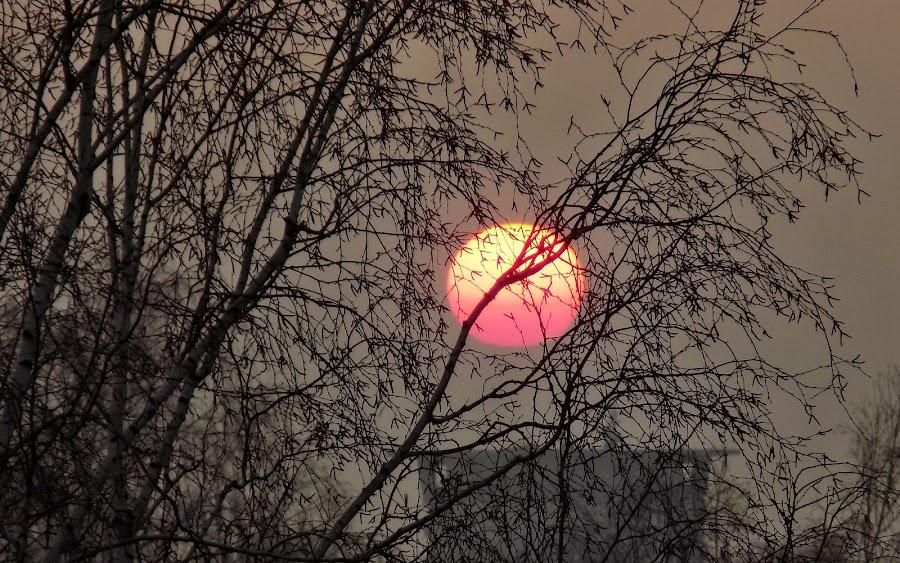Sunset by Karel Šula - Uncategorized All Uncategorized ( sunset )