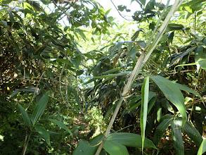 笹が生い茂り