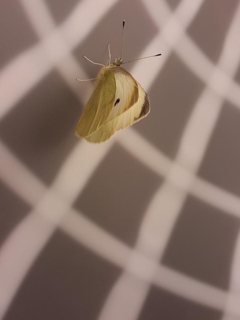 Farfalla nel grigio di ORTENSIA_EFFE