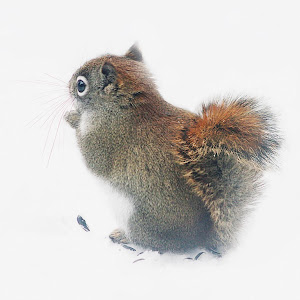 Squirrel in the snow3.jpg