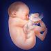 Pregnancy and childbirth. Pregnancy week. Children Icon