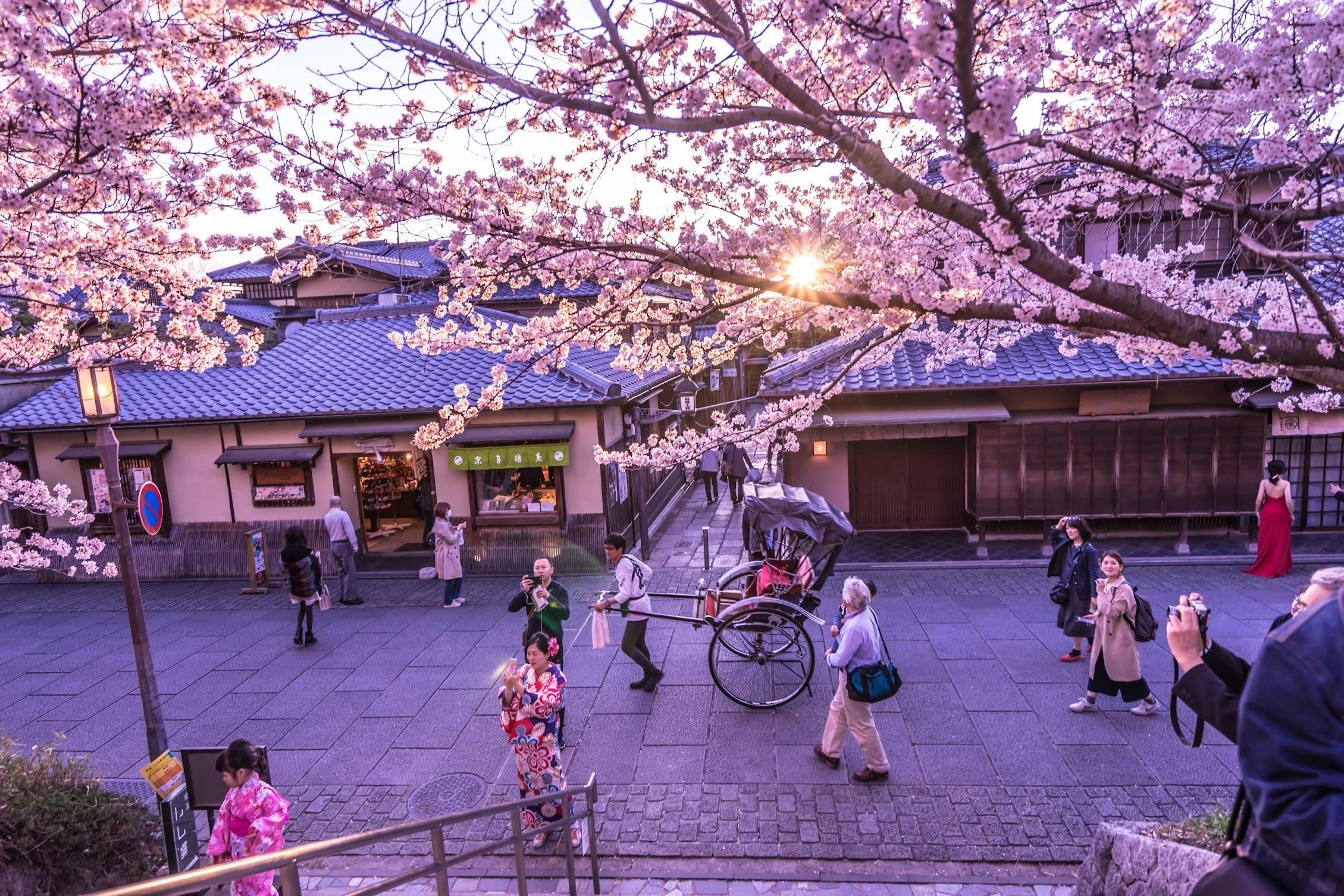 京都 桜 ねねの道3