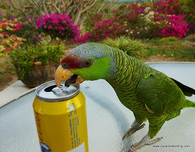 Photo: Jasmine trying to steal my cerveza