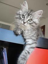 Photo: Ole! Ese tigre blanco (Quimey - 2 meses)