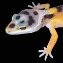 Leopard Gecko Pro 1.0 icon