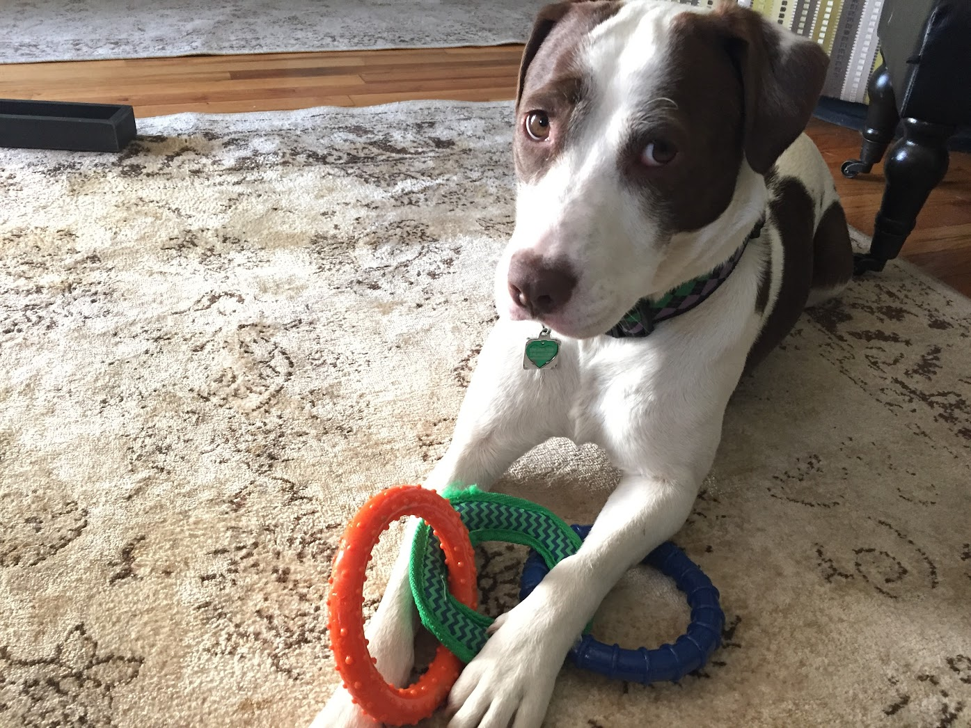 Sally's Puppy Toy Picks - Triple Ring