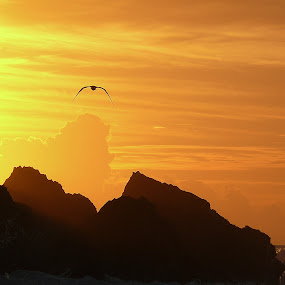 Fly to the sea by Joaquim Machado - Landscapes Sunsets & Sunrises ( fly sea ocean portugal )
