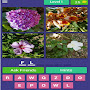 say it as you see it-to the world of 4 pics 1 word APK icon