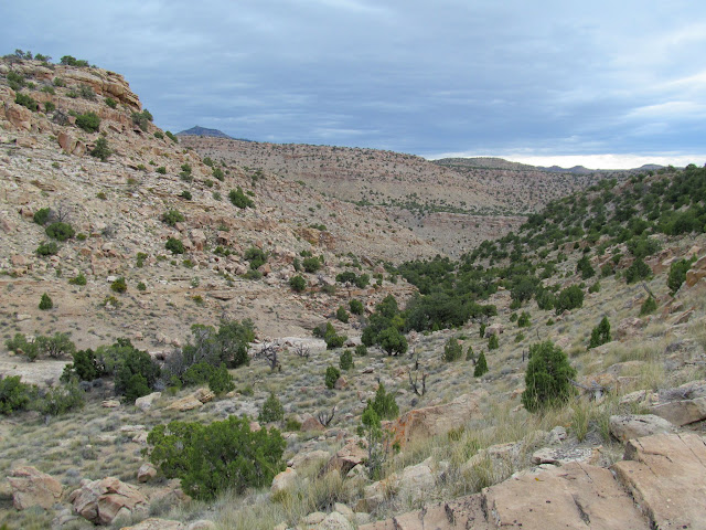 Short drainage leading to Little Park Wash