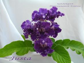 Photo: Justa