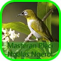 Masteran Pleci Ngalas Ngerol icon