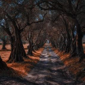 Pazo de Rivadulla by Jose María Gómez Brocos - Landscapes Forests ( tree, trees, way, forest, landscape, leaves, light, shadows )