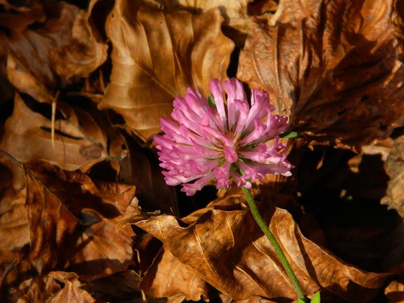 Poesia d'autunno di lucaldera